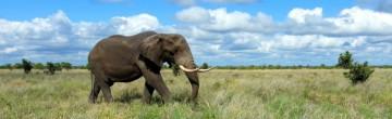 Zájezd do JIžní Afriky za přírodou, uměním i historií