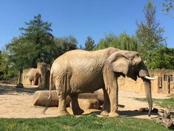 Safari Dvůr Králové aneb Afrika v srdci Evropy